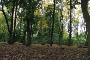 Beacon Park's woodland