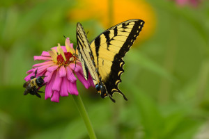 Butterfly & Bee Walks